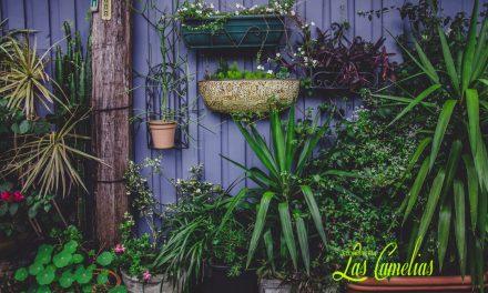 Ambientes con Jardineras