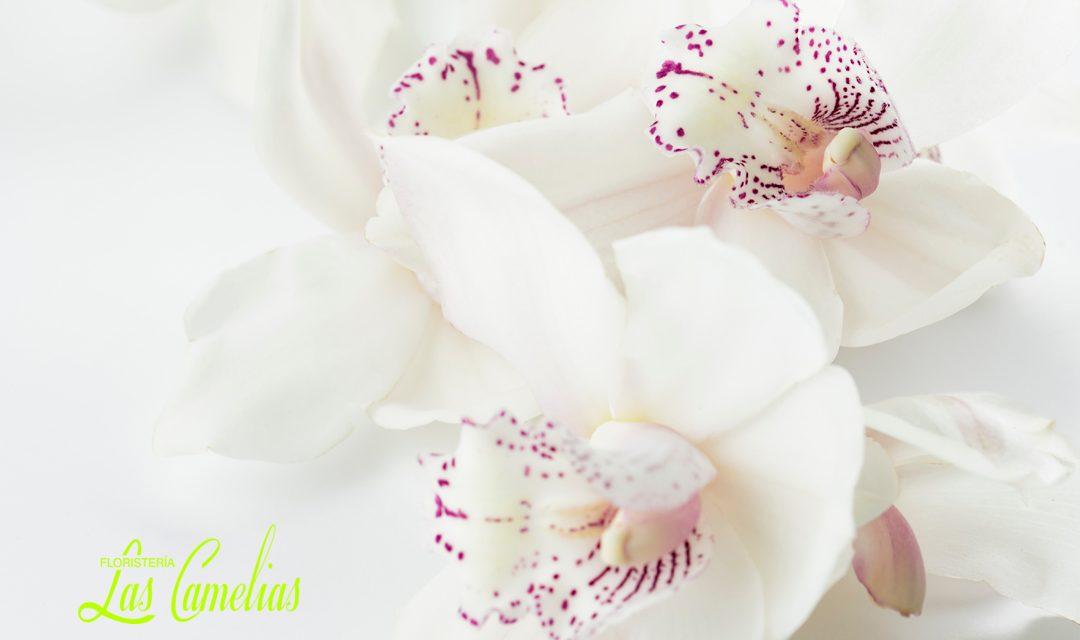 Orquídeas, guía fácil de mantenimiento y conservación.