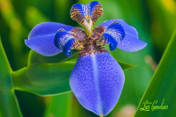 guía fácil cuidado orquídeas