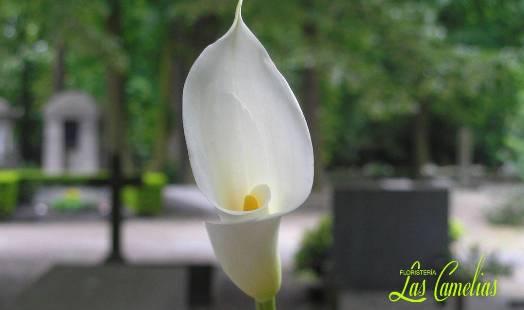 Decoración floral para el Día de todos los Santos