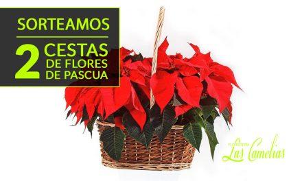 Sorteo 2 Cestas de Flores de Pascua.