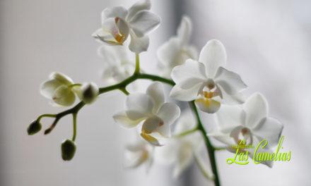 Flores como recuerdo para el día de Todos los Santos