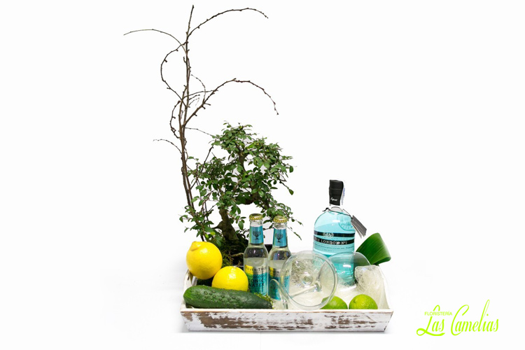 regalar bonsai y gin tonic