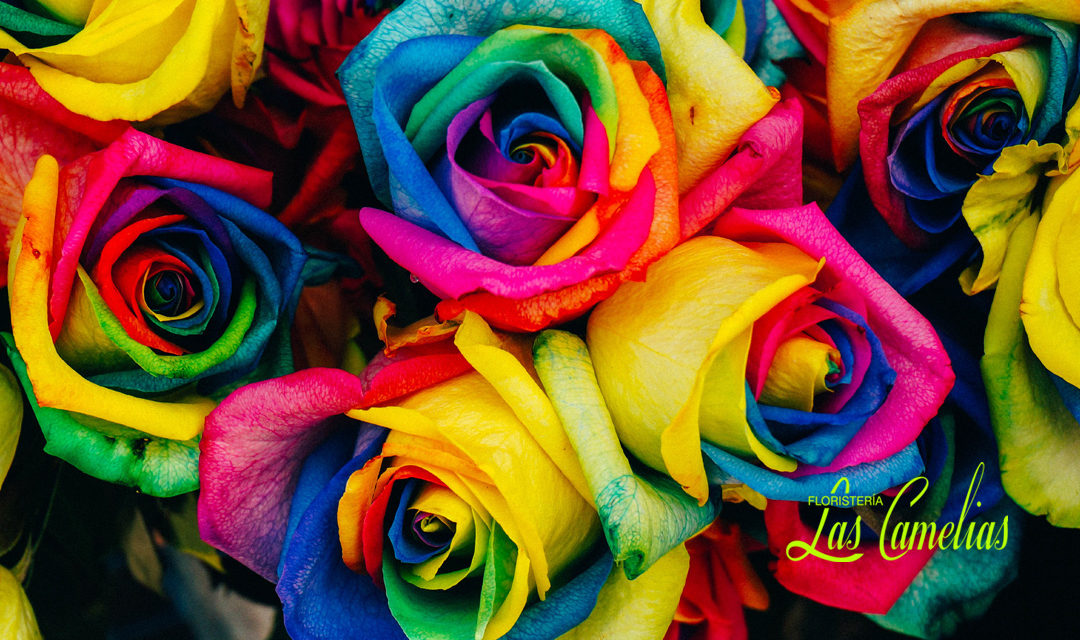 El significado del color de las rosas