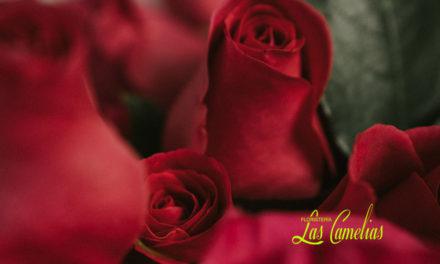 Significado del número de rosas