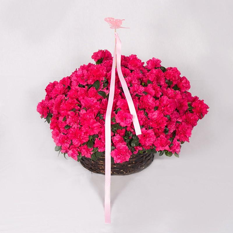 Cesta de plantas con flor Alacant