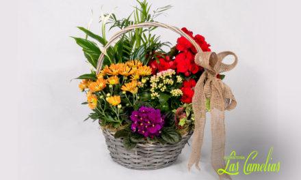 Cestas de plantas con flor