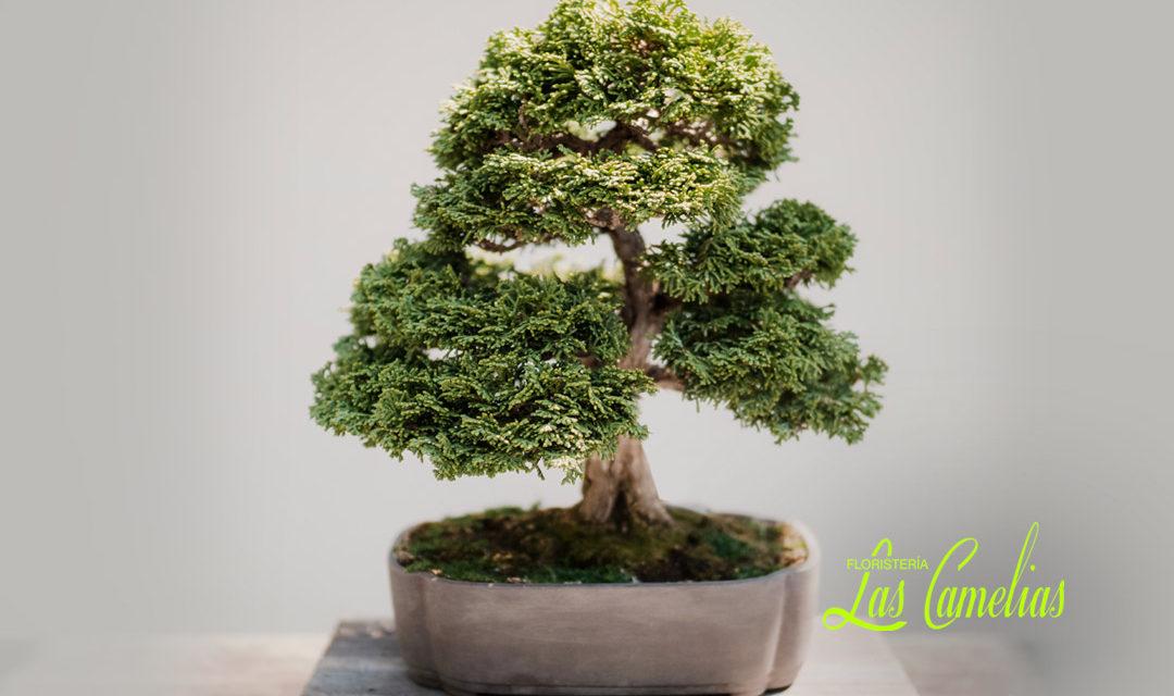 Cuidado del bonsai
